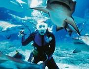 Hogyan ússzunk meg egy cápatámadást?!