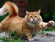 Kérdőív macskáknak