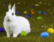 Húsvéti locsolóversek nagyoknak!