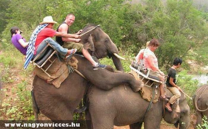 Az elefánton utazás problémái