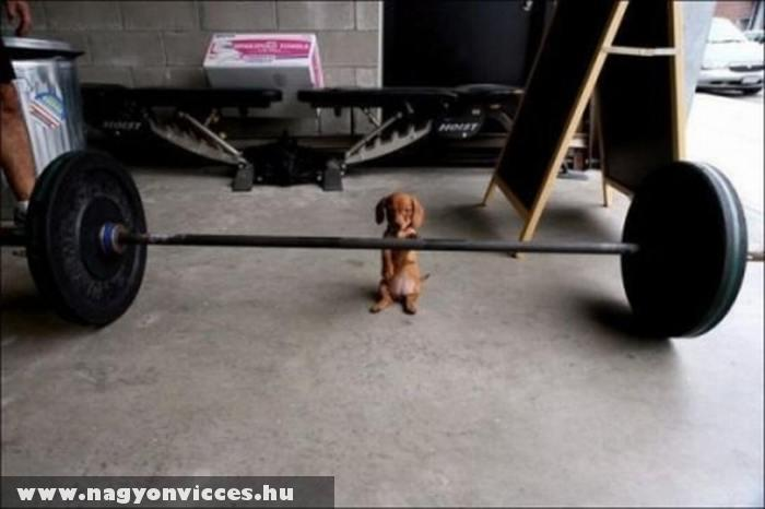 Gyúrós kutyus