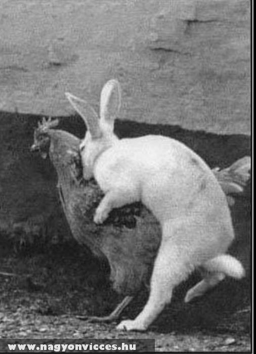 Így készül a húsvéti tojás