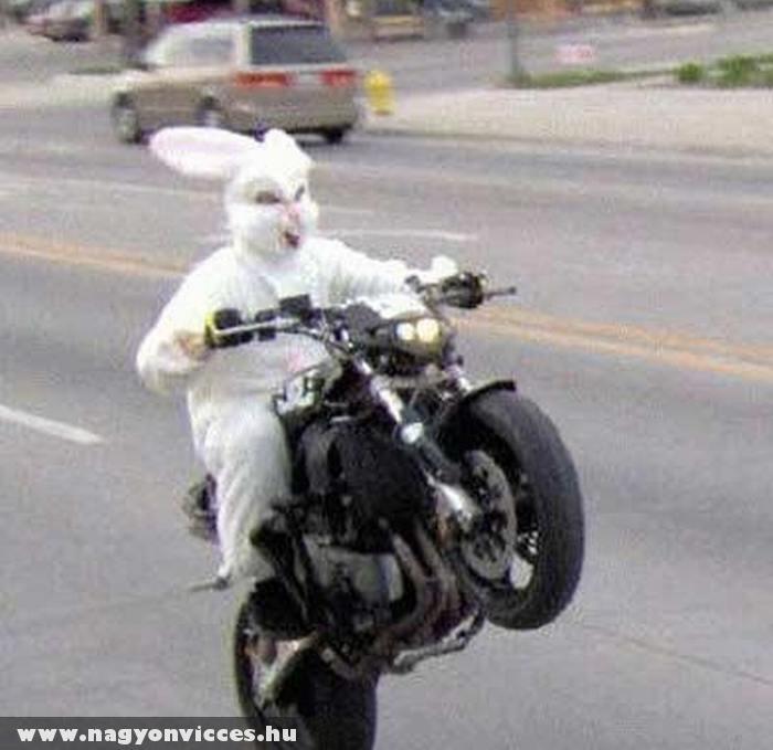 Vadul a húsvéti nyuszi