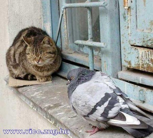 A macska nem fél a madárinflulenzától!