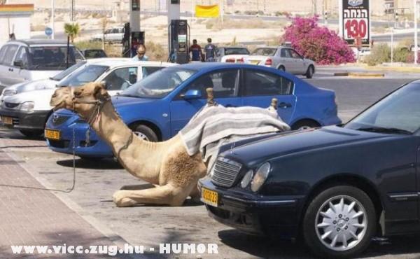Mazda -> Dromedár -> Merci... A fejlõdés útja, avagy parkolni mindenkinek szabad?