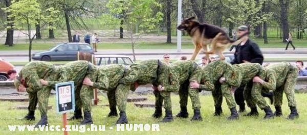 Kutyaparancsnok