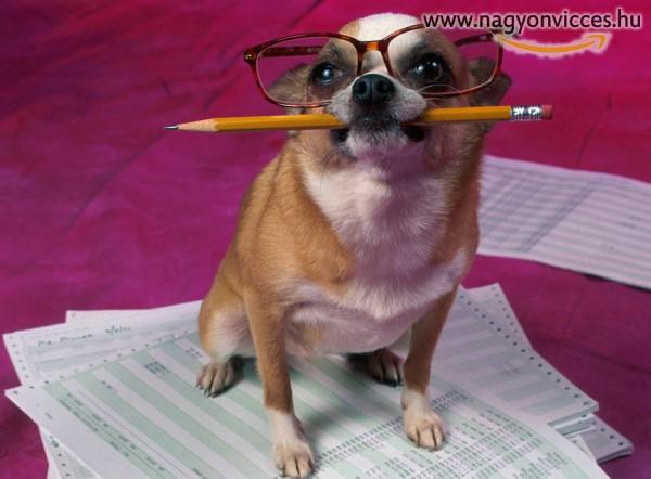 Kutyául készülj a vizsgaidőszakra