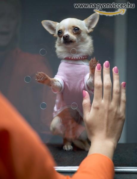 Paris Hilton kiskutyája
