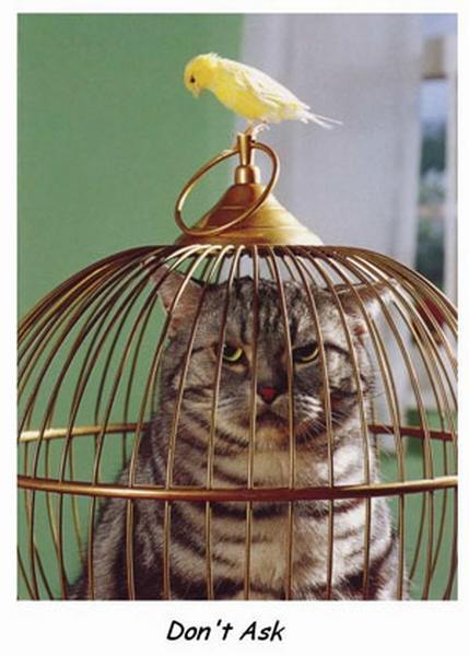 Megfordult a kocka, macska a kanárisban :D