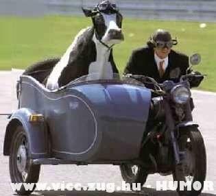 állatorvoshoz megyünk