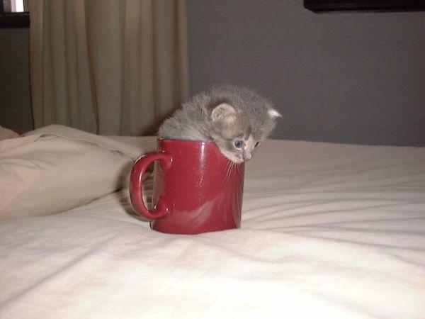 Poharas macska