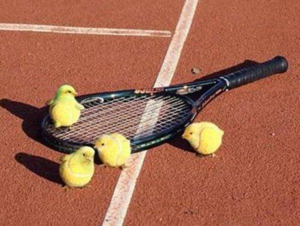 Csibe tenisz