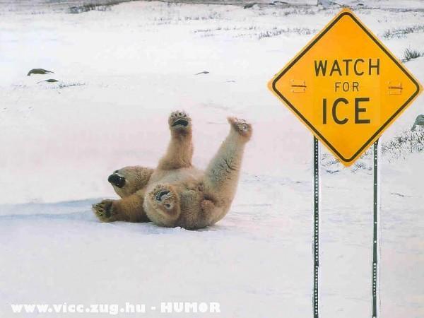 Berugott a jegesmaci