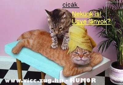 Macska masszázs