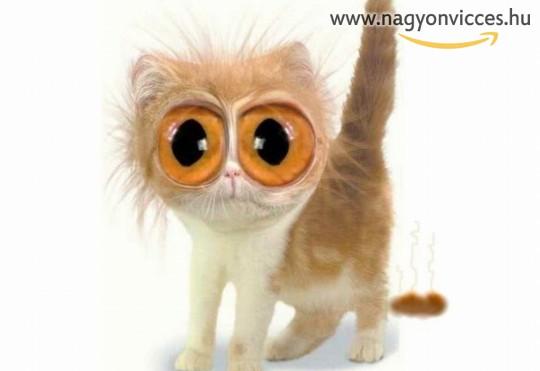 Nagyszemű cica :)