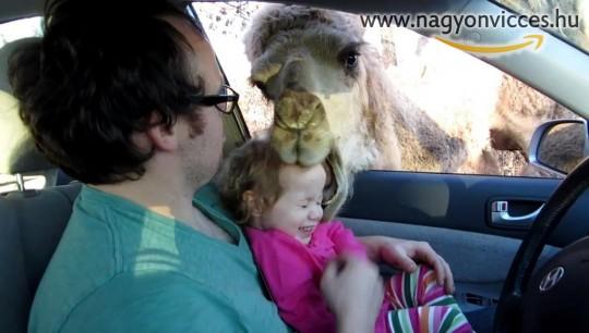 Szafari parki incidens