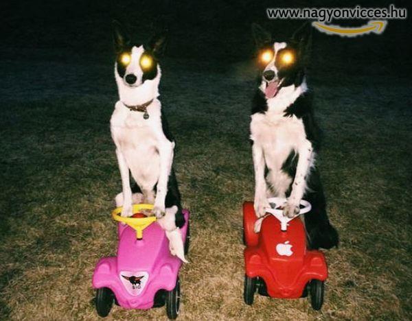 A kutyák is szeretnek autókázni