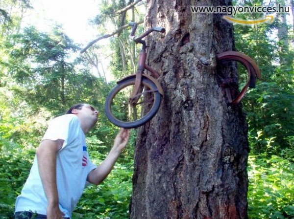 Amikor a fa megeszi a bringát
