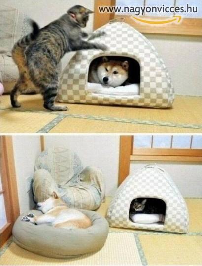 Amikor a macska az úr