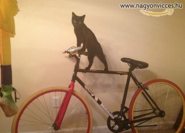 Bringázó macska