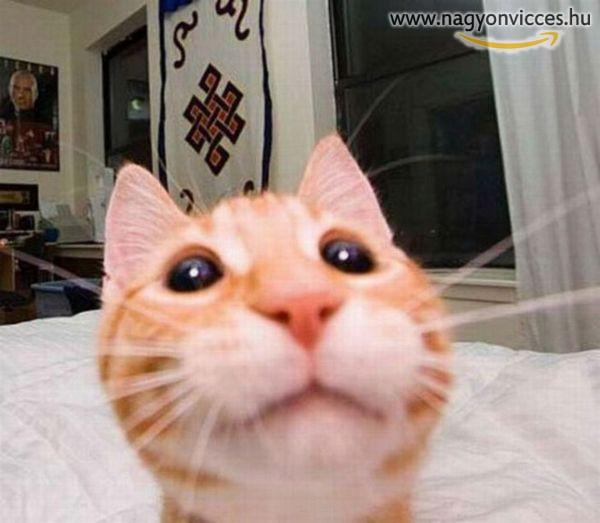 Cica selfie