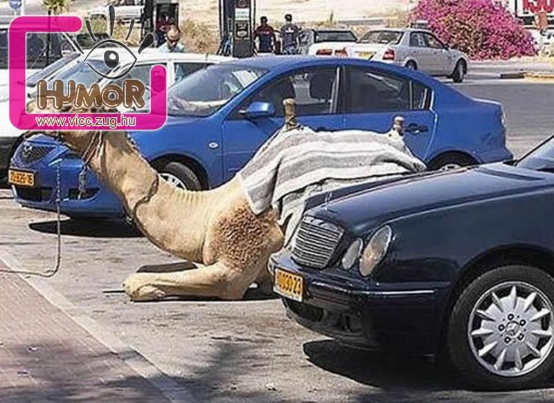 Furcsaság a parkolóban