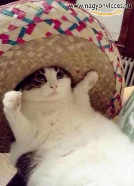 Macska sombrero kalapban