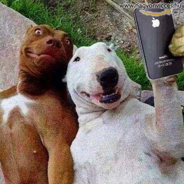 Még a kutyák is selfiznek
