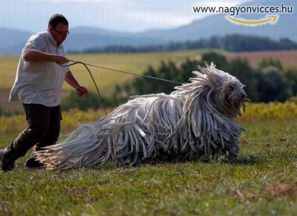 Óriási kutya