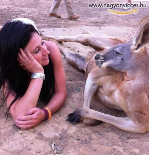 Pihenés egy kenguruval