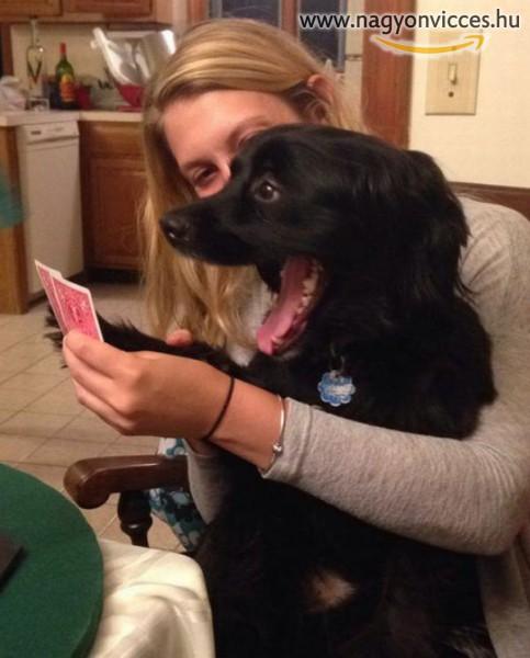 Pokerface kutyus