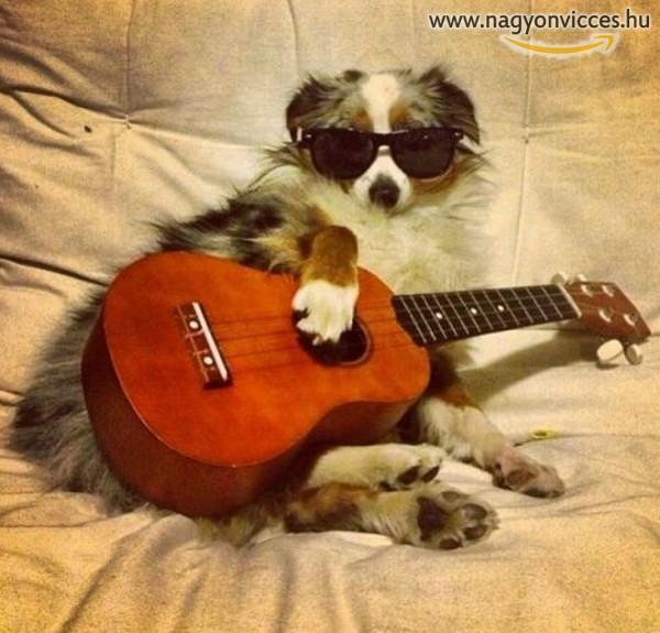 Rocksztár kutyus