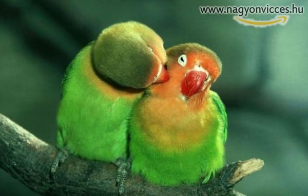 Romantikázó madarak