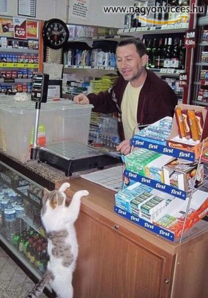 Vásárló macska
