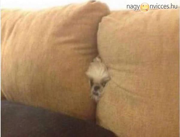 Itt a kutyus, hol a kutyus