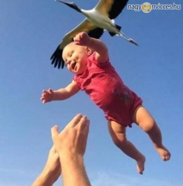 Gólya hozta baba, kapd el!