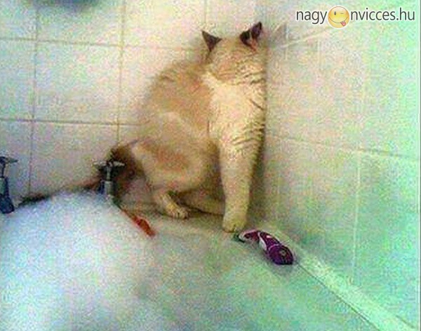 Én ugyan meg nem fürdök
