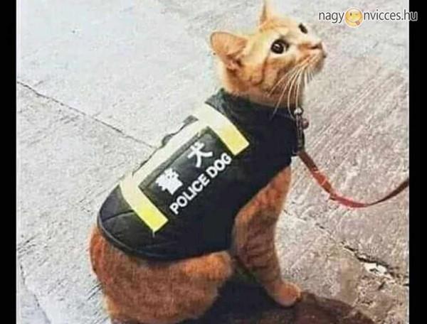 Rendőr macska