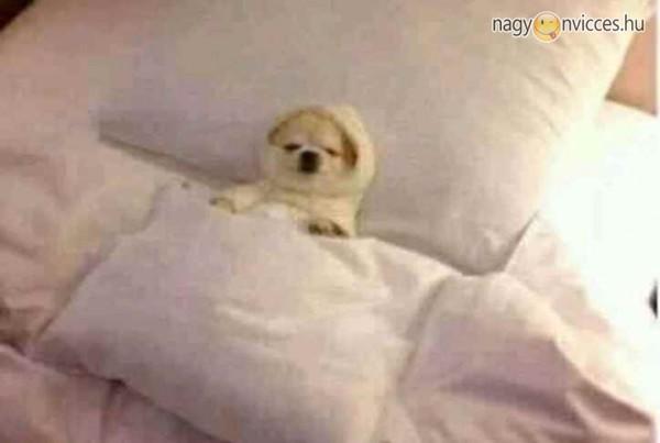 Alvás, pihenés