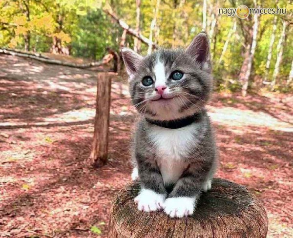 Cicamentő cica