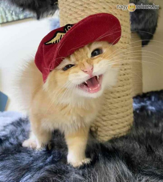 Hip Hop Cat, Rap