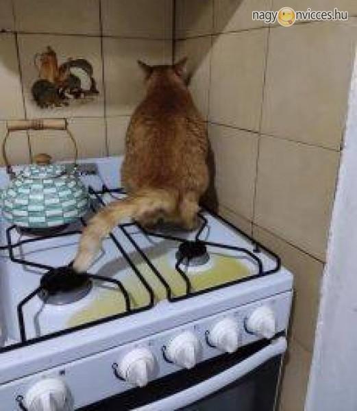 Cica szorgosan végzi a dolgát a konyhában