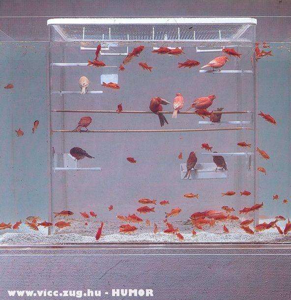 Akvárium vagy kalitka