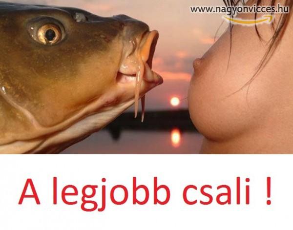 Csali