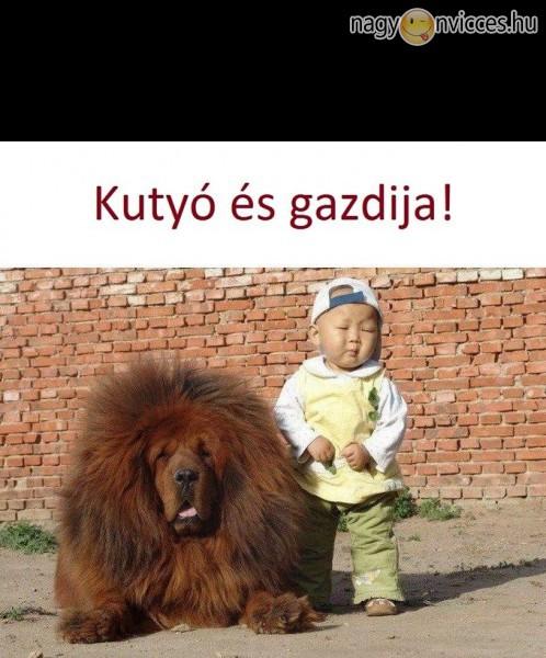 Kutyó