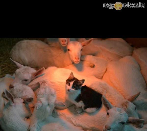 Melegedő cica
