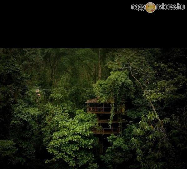 Menedék a dzsungelben