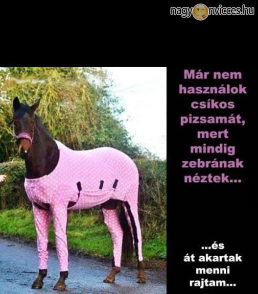 Okos ló