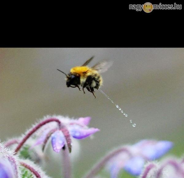 Pisilő méhecske