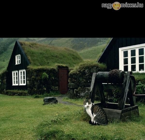 Vidéki cica